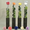 stabilized_roses